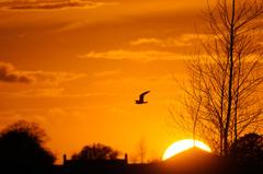 Mooie zonsondergang in dinteloord. #buienradar
