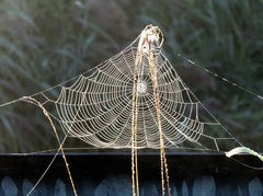 Mooie spinnenwebben door de mist.  #buienradar