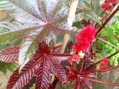 Een fleurig plaatje om de dag een beetj op te fleuren  #buienradar