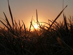 Het was een prachtige zonsopkomst in #Stiens #buienradar