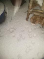 pootjessporen zoeken  sneeuwdek cir. 5 cm Meppel #buienradar