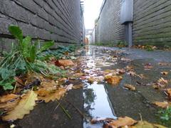 ook herfst..... #buienradar