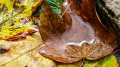 Zon en regen op de gevallen bladeren, Herfst in Rivierengebied om 12.50 uur    #buienradar