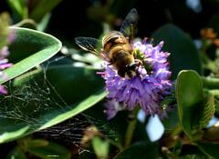 Met het verschijnen van de Zon,worden ook de Bijen weer actief! #buienradar