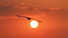 De zon tegemoet!! #Zon #buienradar