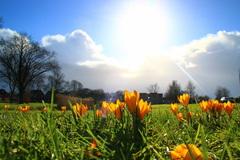 Tussen de buien door was het gister net lente zon en krokussen  #buienradar