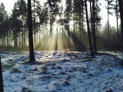 Hoge Vuursche, vroeg in de morgen. #buienradar