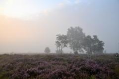 mist op donderdagochtend #buienradar