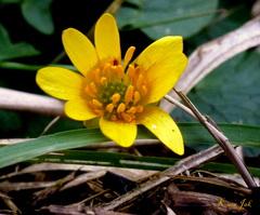 Pril begin van de lente? #buienradar