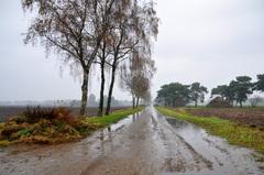 zwaar bewolkt, sterk nevelig met weinig wind, en regen bij 8 graden op zondagochtend in zuidoost Brabant #buienradar