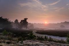 Vanochtend om 6 uur net nadat de zon boven de bomen komt bij de Treekerduinen in Leusden. #buienradar