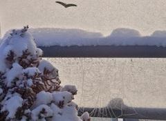 heel veel  sneeuw  in Brabant. Fraai  de  bevroren  spinrag #buienradar