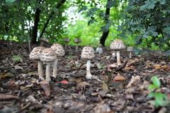 de paddenstoelen schieten werkelijk uit de grond met dit vochtige en zachte weer #buienradar