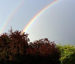 Regenboog 2 #buienradar
